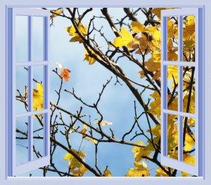 Window Repair in Bloomington MN